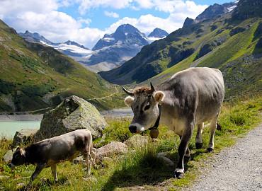 6 dagen Almabtrieb in Tirol