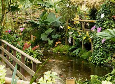 Tropische Orchideeënpracht
