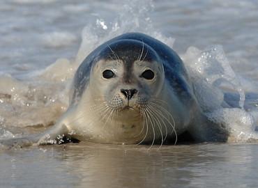 Zeehonden en vergezichten Zeeland