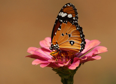 Voorjaarstochtje met vlinders of fruit