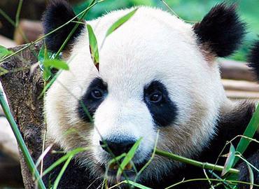 Op bezoek bij de Panda's!