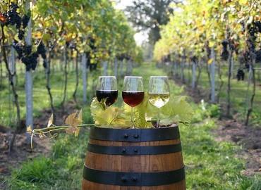 Herfstkleuren en wijn