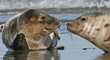Zeehonden safari in Zeeland