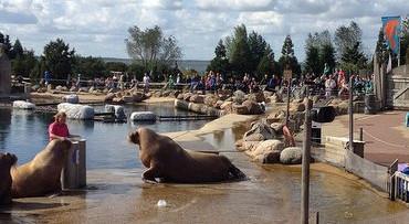Zeedierenpark Dolfinarium