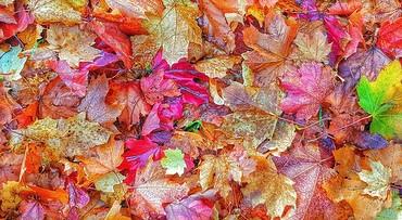 Kastelen en herfstkleuren